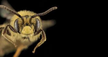 Perché i vegani non mangiano il miele?