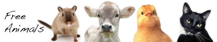 Immagine della testata di Progetto Vivere Vegan
