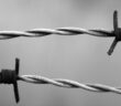 olocausto