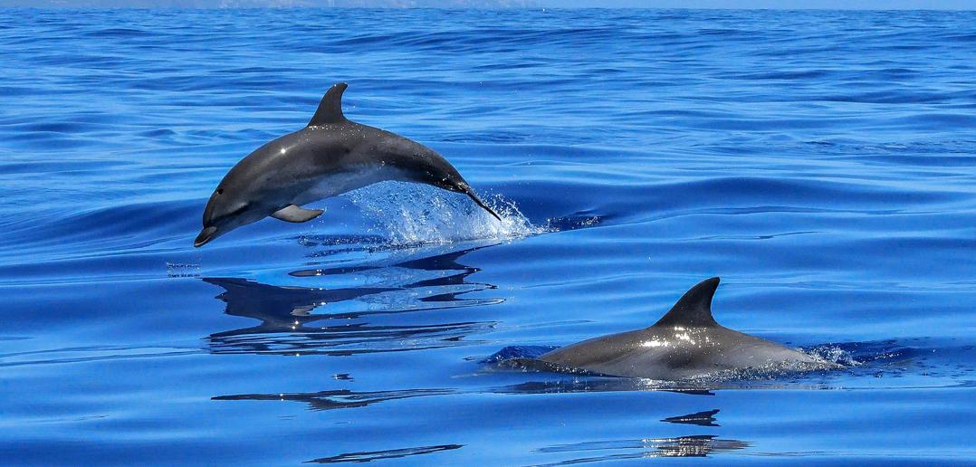 Il bagno con i delfini ne faremo a meno vivere vegan - Bagno coi delfini ...