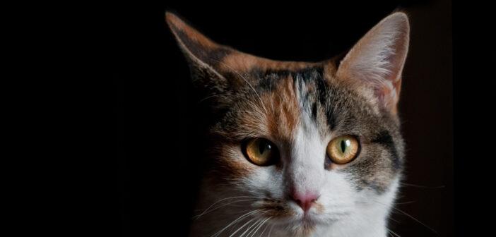 Quando il gatto è un clandestino