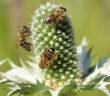 api-al-lavoro-foto di Annette Meyer