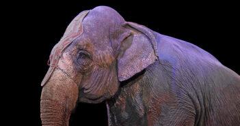 elefante-circo