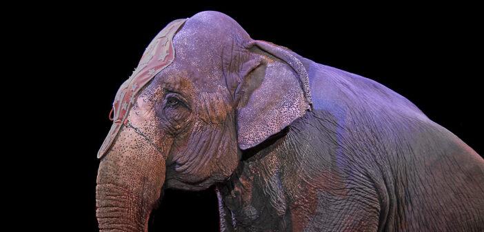 Parigi vieta il circo con animali selvatici: un piccolo passo