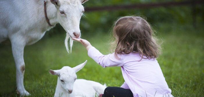 Per una scuola sempre più rispettosa degli Animali