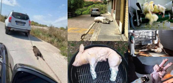animali maltrattati cane di priolo ucciso