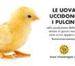 le uova uccidono i pulcini