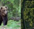 orsi trentino
