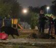 uccisioni-cinghiali-roma