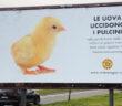 manifesto-pulcini-uova